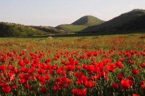 В Туркменистане отложено открытие сезона охоты