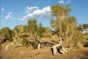 20 thousand seedlings planted on the outskirts of Botendag in Dashoguz velayat